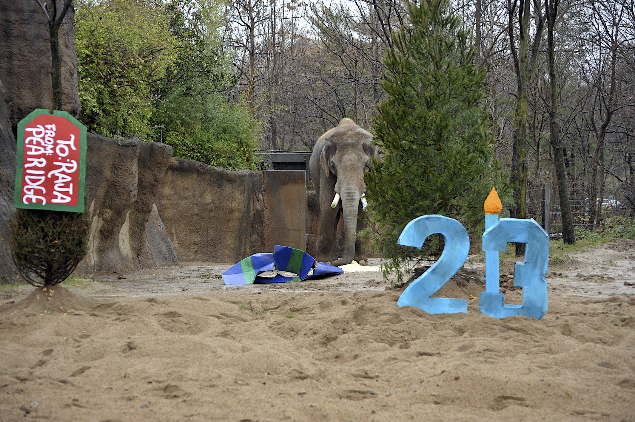 Birthday Party St Louis Zoo Image Inspiration of Cake and Birthday