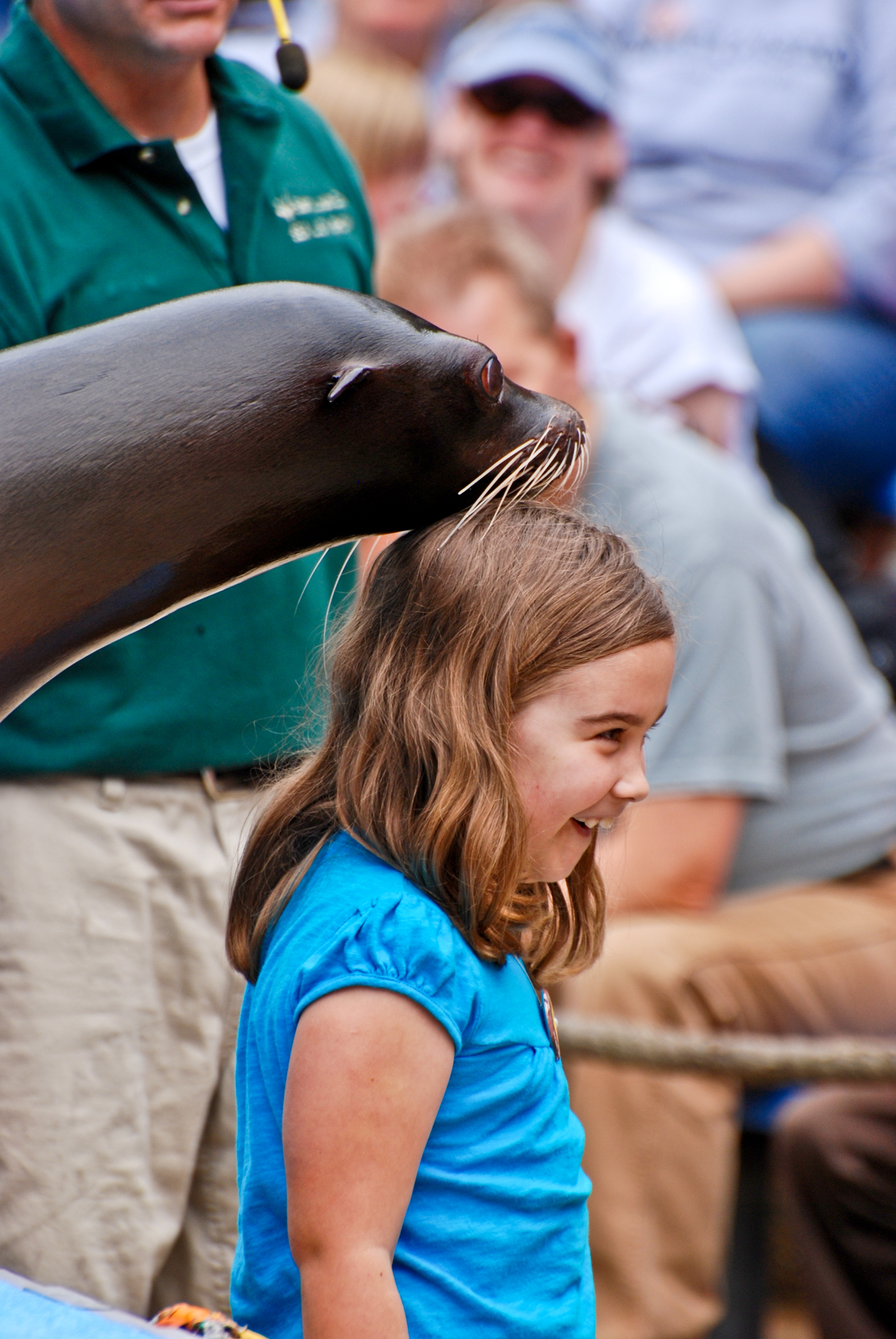 First Bank Sea Lion Show | Saint Louis Zoo