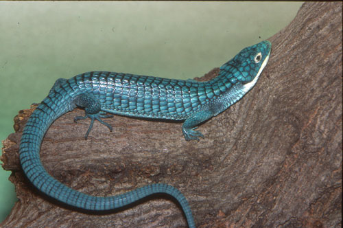 Reptiles On Our Web Site | Saint Louis Zoo