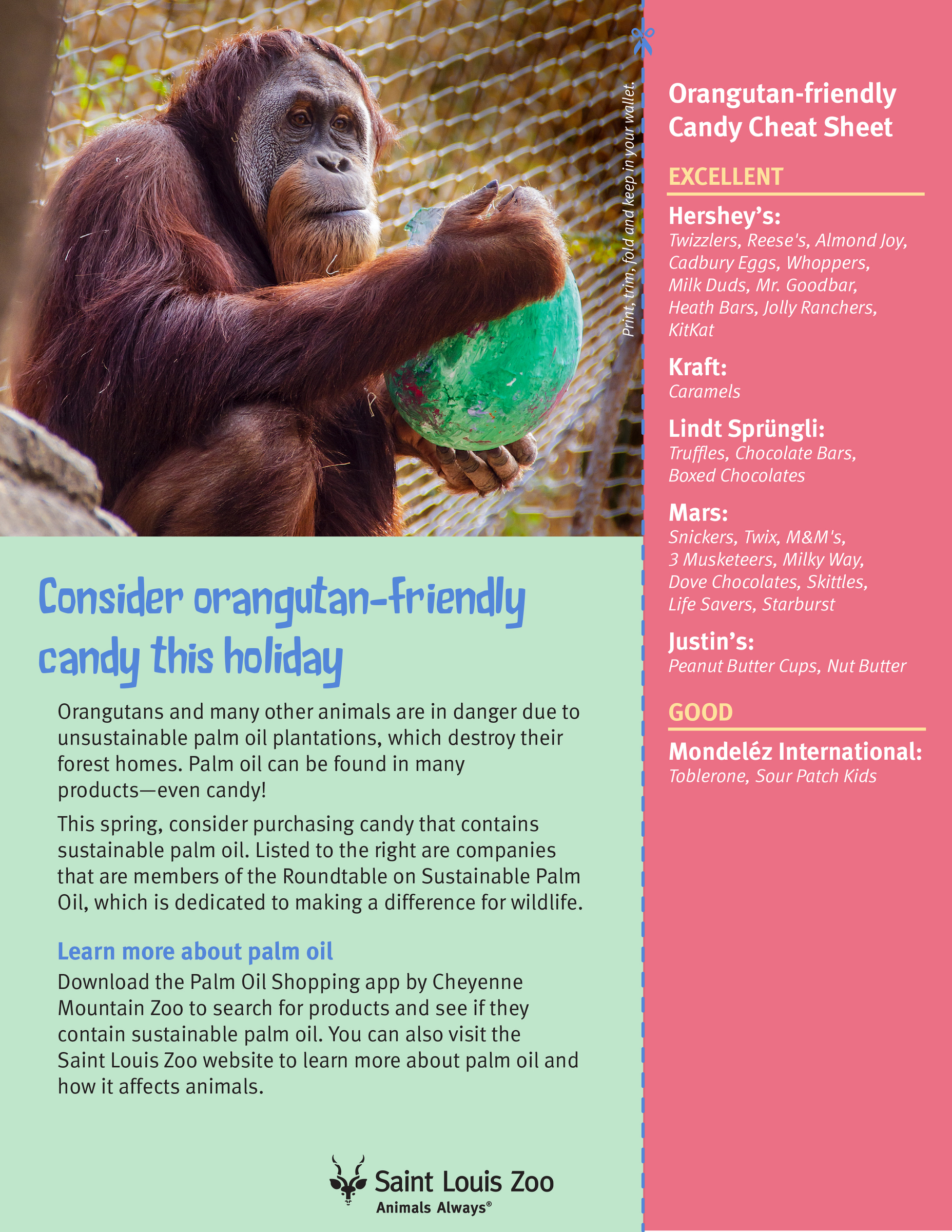 Palm Oil and Orangutans | Saint Louis Zoo