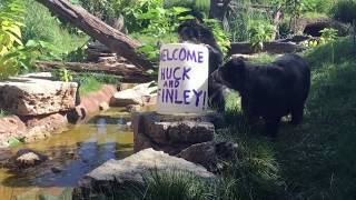 A Bear-y Special Welcome
