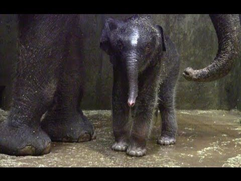 Baby elephant's first bath