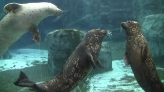 New harbor seals