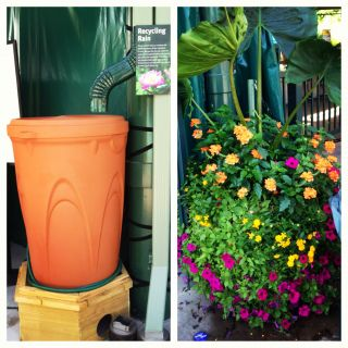 Rain Barrel_Aug13.JPG
