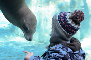 Sea lion with visitor. Photo: Robin Winkelman