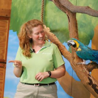 Macaw at Children's Zoo show