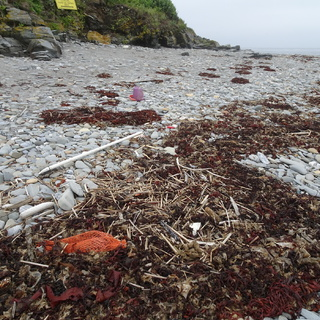 Pail and lobster bait bag on pebble beach. Inside all the seaweed are more small pieces of plastic.