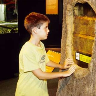 Boy looking at beehive.