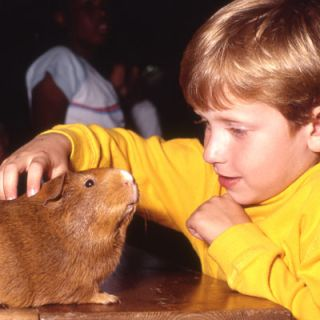 Boy petting guinea pig in the Children's Zoo