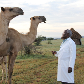 One Health Camels