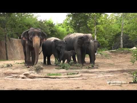Three generations of elephants, including three-month-old Kenzi!