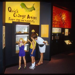 Three visitors viewing the Quick Change Artists exhibit at the Insectarium